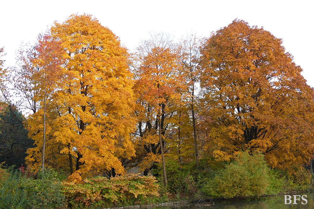 Herzinfarkt vorbeugen: Herbstblues ersetzen durch positive und frohe Gedanken